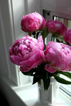 Love the vase! #plants #peonies