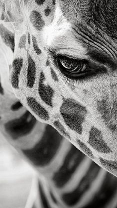 #blackandwhiteanimalphotography