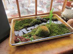 miniature moss garden