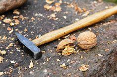 Víte o tom, že skořápky vlašských ořechů jsou plné jódu? Řada lidí trpí nedostatkem jódu, aniž by si to uvědomovala.