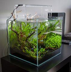 ADA square tank