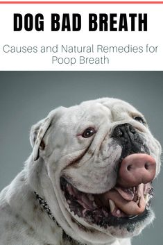 Dog Bad Breath – Causes and Natural Remedies for Poop Breath