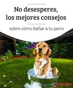 No desesperes, consejos sobre cómo bañar a tu perro  A veces divertido, a veces irritante, sea como sea tenemos que hacerlo, pero no desesperes, te ayudamos con algunos consejos sobre como bañar a tu perro.