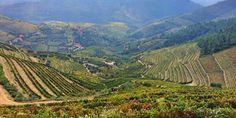 Il Douro Superiore è il Nuovo Mondo del vino Porto?