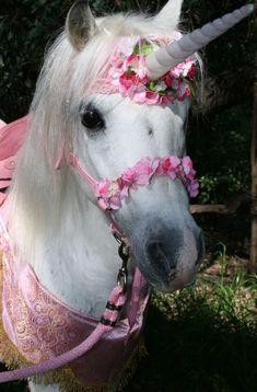 Mesdemoiselles, Mesdames, les poneys pour princesses existent ! Nous voilà rassurées. #tellementmignon #jesuisunelicorne http://on.fb.me/ZS6ogD