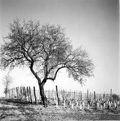 #blogagricolo #gliamicidelbar #alberi #vita #terra #cielo