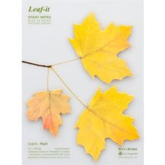 Leaf-it Maple nature inspired sticky notes for home and office use