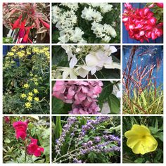 Mid summer flowers in my garden.