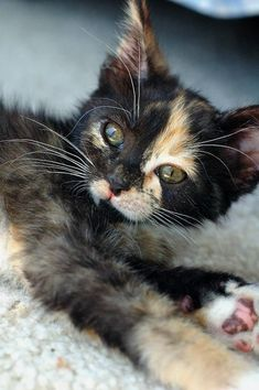 AAaaahhh!!! So cute! So precious <3 <3 #kitten #cat