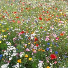 - ̗̀ saith my he A rt ̖́- Spring Aesthetic, Plant Aesthetic, Nature Aesthetic, Flower Aesthetic, Aesthetic Girl, Pretty Flowers, Wild Flowers, Fresh Flowers, Exotic Flowers