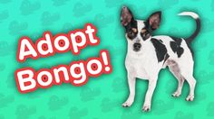 Adopt Bongo! // Terrier Mix // Adoptable Featurette… #funnypetvideos #funnyanimals