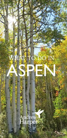 Wondering what you should do in Aspen, Colorado, in 2015?