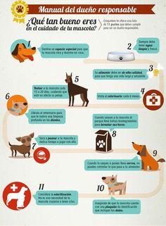 ¿ Que tan bueno eres como  dueño de tu perro ?