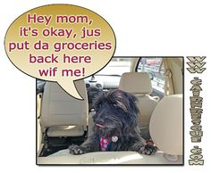 Col. Potter Cairn Rescue Network: Wacky Wednesday!