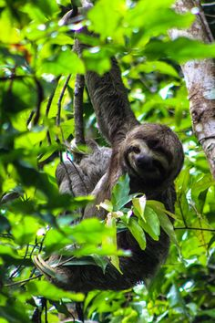 Wildlife Spotting im Manuel Antonio National Park