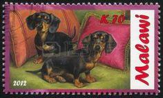 MALAWI - CIRCA 2.012:  Sello impreso por Malawi, muestra perros Dachshunds en la pintura.