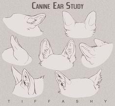 Canine Ear Study/Tutorial by TIFFASHY.deviantart.com on @DeviantArt