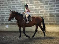 Výsledok vyhľadávania obrázkov pre dopyt jazda na koni