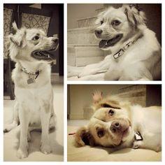 Fica Cãomigo: Novas fotos da ninhada da Bella