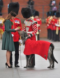 presents a traditional sprig of shamrock to Conmeal, an Irish Wolfhoud & regimental mascot of the Irish Guards regiment on St Patrick's Day.