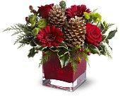 Google Image Result for http://www.christmasflowersonline.com/images/cozy-christmas.jpg