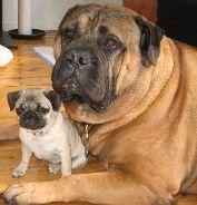 Big Dog, Little Dog ♥