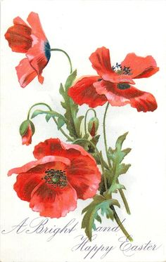 A BRIGHT AND HAPPY EASTER poppies, three red blooms & two buds, two stalks to bottom right - TuckDB