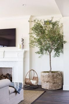 Plant of the Year Indoor Olive Tree &; Thou Swell Plant of the Year Indoor Olive Tree &; Thou Swell Larissa Strachwitz larissastrachwitz Pflanzen Indoor olive tree in a pot. Coastal Living Rooms, Home Living Room, Living Room Decor, Living Spaces, Small Living, Living Area, Tree Interior, Home Interior Design, Exterior Design