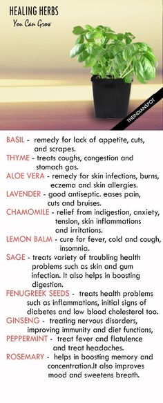 nice Best Medicinal Herbs You Can Grow At Home....