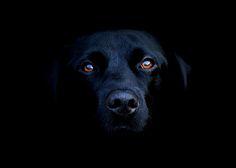 Blackdog.jpg (500×357)
