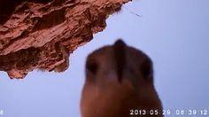 eagle steals camera