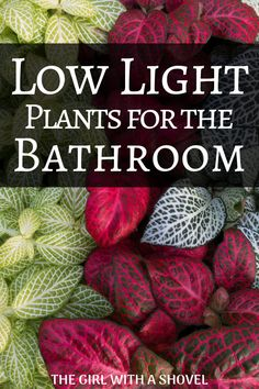 - Low Light Plants for the Bathroom No sunlight in your bathroom? No problem! Use one of these low light plants for your bathroom and enjoy the beauty and life that comes with decorating with plants! House Plants Decor, Plant Decor, Garden Plants, Inside Plants, Cool Plants, Air Plants, Cactus Plants, Low Maintenance Indoor Plants, Apartment Plants