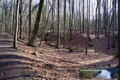 Strecke Bonn-Oberkassel - Kloster Heisterbach 02.02.2014 - Blick in den Wald