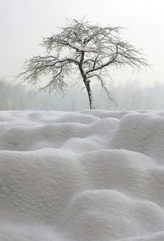 White Tree ~ Winter Wonderland!