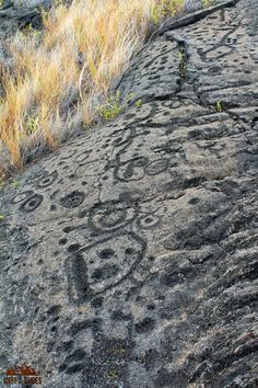 Check out these petroglyphs at Hawaii Volcanoes National Park!  Learn about 5 things you can't miss on your first visit -- written by a former park ranger!