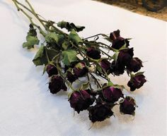 This bunch of fresh cut and dried gorgeous burgundy spray roses is perfect for your floral needs. Approximately 15 inches in length with roses. Roses are approximately 1 inches in length and inches in diameter. These roses dried beautifully! Drying Roses, Spray Roses, Burgundy, Plants, Beautiful, Life, Flora, Plant