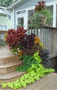 Lots of sun coleus and the trailing sweet potato vine is stunning.