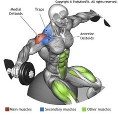 SHOULDERS - SEATED STABILITY BALL DUMBBELLS LATERAL RAISE