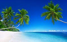 beach wallpaper Tropical Fototapete Sea Fototapete Malediven – Susan Newsome – Join in the world Paradise Wallpaper, Beach Wallpaper, Summer Wallpaper, Tree Wallpaper, Nature Wallpaper, Laptop Wallpaper, Tropical Wallpaper, Wallpaper Desktop, Photo Wallpaper