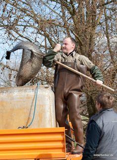 #Fischwerkstatt 2016 im #Spreewald mit #Wels  www.hotel-stern-werben.de