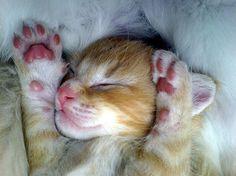 Pink pawed baby  http://www.advancedphotography.net/cute-pet-photographs-33-cutest-pet-pics/