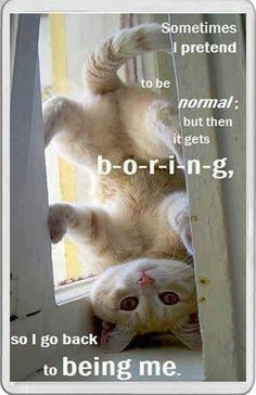 1000 Ideas About Cats Funny Sayings On Pinterest Funny