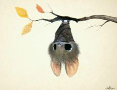 Next time someone says bats aren't cute, I'll show them this. :)
