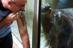 Baby Orangutan, Obsessed With Me, I Tattoo, Sisters, Shit Happens, Friends, Projects, Red, Animals
