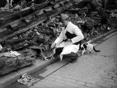 World War II, 24th October 1940, London, England, A steel helmeted PDSA (People's Dispensary For Sick Animals) official, rescues cats from the wreckage of a bombed East London building (Photo by Popperfoto/Getty Images)
