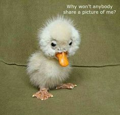 A new meaning on the ugly duckling❤️❤️