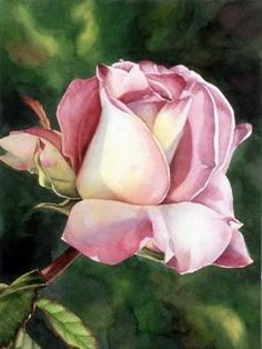 """""""Springtime Rose"""" by Grace Swanson     Watercolor.     ♡ GLORIOUS!  ♥A"""