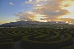 A maze(ing) view ;) - The Peaks of the Mourne Mountains, County Down, from Castlewellan hedge maze on a winters afternoon. Scenery Tattoo, Hedges, Maze, Mountains, Outdoor, Outdoors, Living Fence, Labyrinths, Outdoor Games