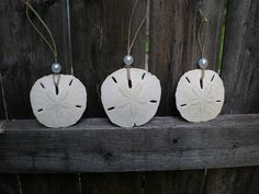 These wonderful sand dollars are harvested off the coast of Florida. They are found dead in the more shallow waters so these sand dollars are
