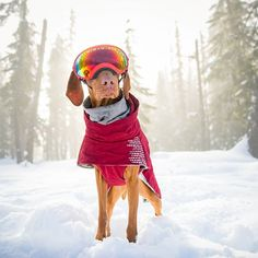 If I'm going to be cold I might as well own it. Do your best Winter. #dogsthathike #whistler #wanderlust